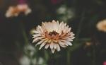 Обои Цветок на размытом фоне, by Daniel Spase