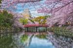 Обои Вид на замок в Осаке / Osaka, Япония / Japan во время цветения сакуры, фотограф Bagus Pangestu