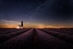 Обои Лавандовое поле под ночным небом. Фотограф Georg Scharf