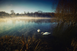 Обои Два лебедя на реке, by John Simon
