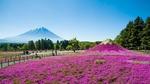 Обои Вид на вулкан Фудзияма / Fujiyama в парке Hitsujiyama на фестивале Fuji Shibazakura, Япония / Japan