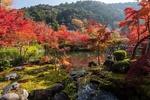 Обои Пруд в окружении осенних деревьев в парке, Kyoto / Киото, Japan / Япония