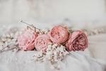 Обои Розовые розы и мелкие белые цветы, by Anita Austvika