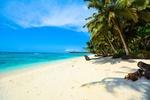 Обои Пальмы на песчаном берегу океана