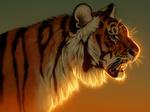 Обои Тигр на фоне закатного неба, by Pixxus