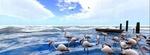 Обои Стая фламинго на морском берегу, by Virtual World Design