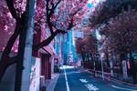 Обои Городская улица с весенними цветущими деревьями, Japan / Япония, by Liam Wong