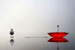 Обои Красный зонт и голубь на воде, by Andre Villeneuve