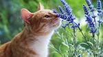 Обои Кошка нюхает цветы