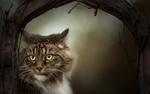 Обои Кошка с грустным взглядом