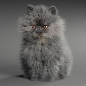 Дымчатый персидский котенок сидит на сером фоне, Little Devil / Чертенок, by Anton Osipkov