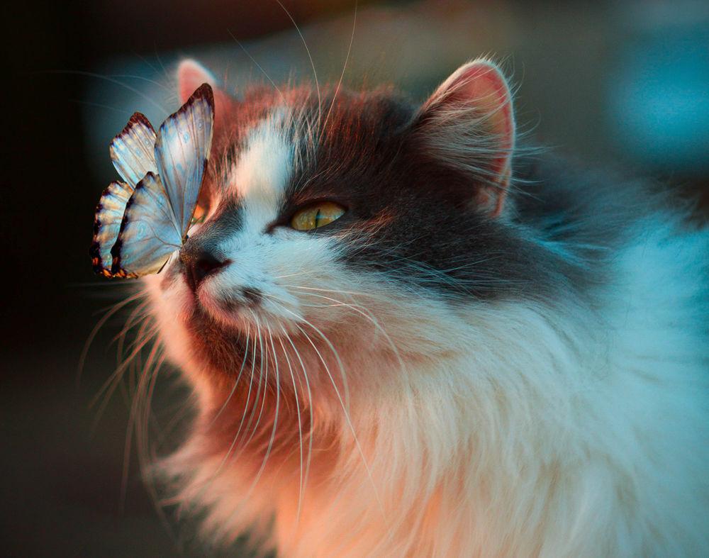 Обои для рабочего стола Кошка с бабочкой на носу, by Карина Ворожеева