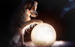 Обои Собака положила лапу на шар