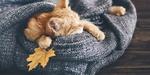 Обои Спящий рыжий котенок, завернутый в шарф