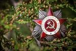Обои Орден Отечественной войны среди веток дерева