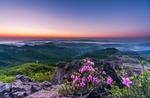 Обои Горная местность в утренней дымке, на переднем плане розовые цветы, by yeodong yoon