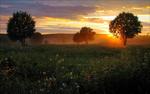 Обои Деревья на цветущем лугу в свете утреннего солнца, фотограф Емеля Емельшов
