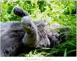 Обои Кошка лежит в траве