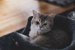 Обои Маленький серый котенок, by n8fire
