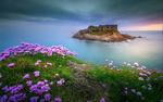 Обои Крепость на острове, на переднем плане сиреневые цветы, Франция, фотограф Wim Denijs