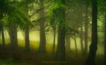 Обои Зеленеющий лес в туманной дымке, by Saydani Hmetosche