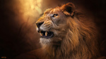 Обои Грозный лев, by Sunil