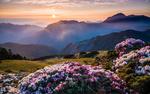 Обои Цветущие рододендроны весенним утром на холмах перед горами
