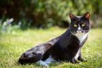 Обои Черный с белым кот отдыхает на лужайке