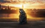 Обои Пушистый кот сидит в солнечном свете, by alpha visuals