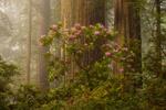Обои Туманное утро в лесу, by Doug Shearer