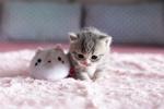 Обои Котенок с игрушкой на покрывале, by what2ver