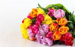 Обои Букет разноцветных тюльпанов