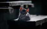 Обои Серый котенок на деревянной скамье, фотограф Баранов Олег