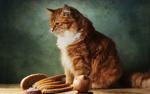 Обои Рыжий кот на столе рядом с луковицей и нарезанным хлебом, фотограф Геннадий Варжен