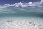 Обои Рыбки в прозрачной воде океана