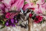 Обои Кошка с бабочкой на голове лежит среди цветов, фотограф Elvira Zakharova