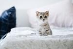 Обои Грустный котенок на постели