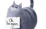 Обои Кошка Chloe, (Oh you again / О, ты снова), мультфильм Тайная жизнь домашних животных / The Secret Life Of Pets 2