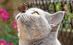 Обои Кошка с бабочкой на носу