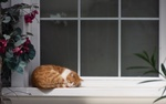 Обои Кошка лежит на подоконнике окна, by Evgen Bryl