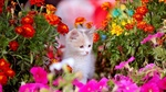 Обои Котенок в окружении цветов