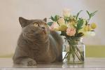 Обои Серая кошка лежит у вазы с цветами