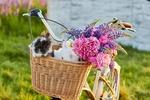Обои Два кролика и букет цветов в плетеной корзине велосипеда