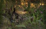 Обои Серый котенок среди зарослей травы и клевера, фотограф Yuriy Kovalev