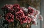 Обои Светло розовые и розовые розы, фотограф Agnieszka Kowalczyk