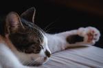 Обои Спящая кошка, by Francesco Ungaro