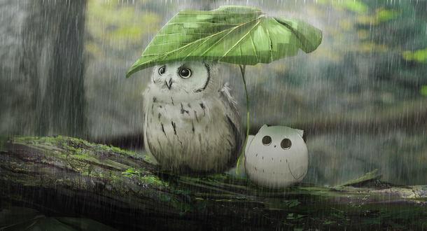 Совенок с совой прячутся от дождя под листочком