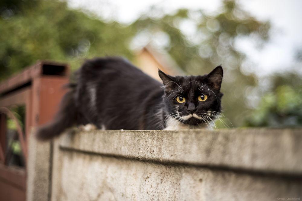 Обои для рабочего стола Кошка сидит на заборе