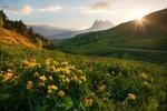 Обои Утопающая в цветах в начале лета Горная Ингушетия, заповедник Эрзи. Фотограф Алексей Дранговский