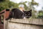 Обои Кошка сидит на заборе
